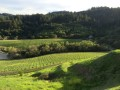 kinsella vineyards 01