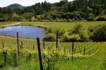 kinsella vineyards 03
