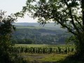 perchaud vineyards 01