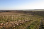 perchaud vineyards 06