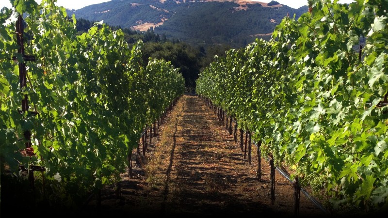 flanagan vineyards 02