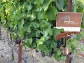 flanagan vineyards 04