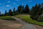flanagan vineyards 05