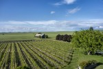 abeja vineyards 02
