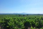 galet des papes vineyards02
