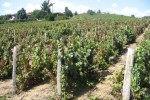 descroix vineyard2