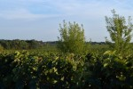 vineyard and bio diversity