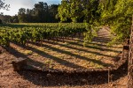 Jakes Creek Vineyard
