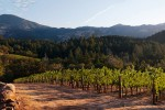Trevas Vineyard at Dawn