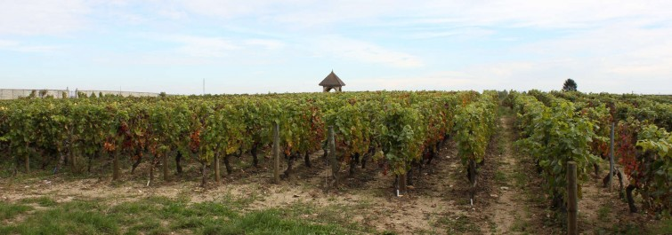 domaine maurice protheau vineyards
