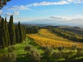 strozzavolpe vineyards 02