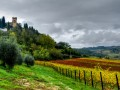 strozzavolpe vineyards 03