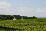 vineyard Cupolas in distance