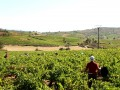 peique vineyards 01