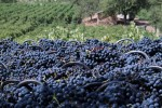 peique vineyards 04