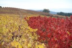 peique vineyards 05