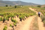 peique vineyards 06