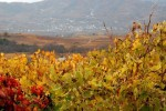 peique vineyards 07