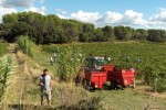 Colline Saint Jean Harvest 6