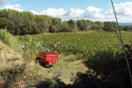 colline Saint Jean harvest 1