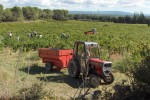 colline saint Jean harvest 9