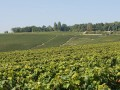 hautvillers vineyard