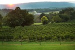 sunset vineyards