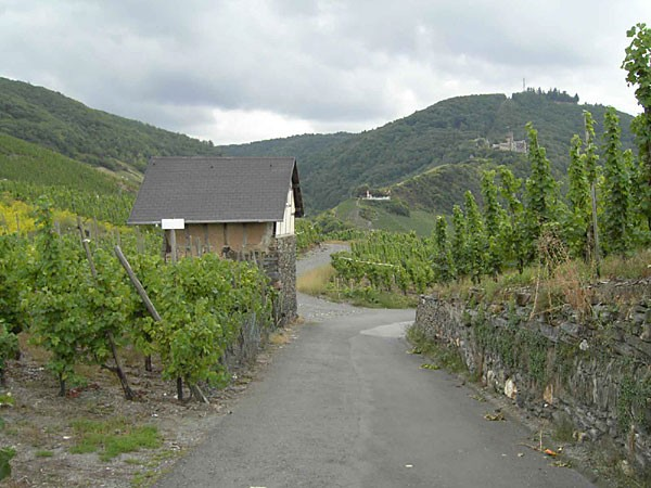 hansen vineyards