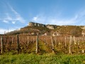 Trouillet lebeau william vineyards winter 01