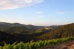 castelmaure vineyard01