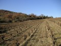 castelmaure vineyard04