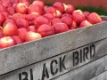 black bird cider works bins