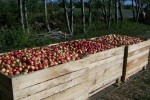 black bird cider works loaded bins on sled