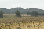 segries vineyard01