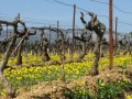bernardins vineyard01
