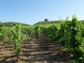 fayolle vineyard03