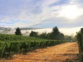 fullerton vineyard 01