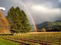 vineyards rainbow