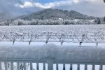 vineyards snow