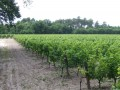 arnauton vineyards02