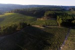 Taboadella vineyards aerial view