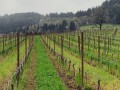 holocene vineyards 6126