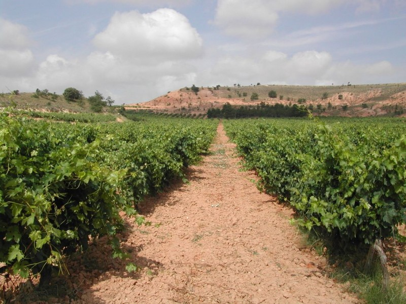 ebano vineyard