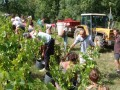 domaine manoir du carra beginning the harvest