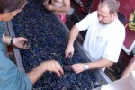 domaine manoir du carra sorting