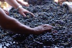 domaine manoir du carra sorting2