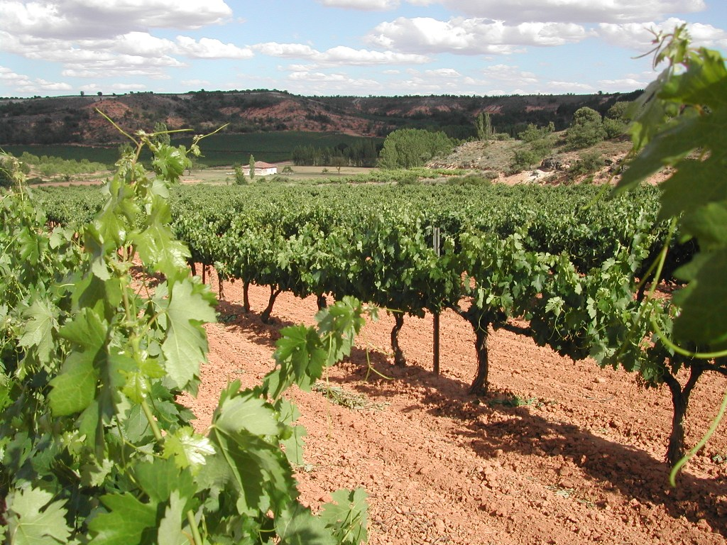 ebano vineyard 5