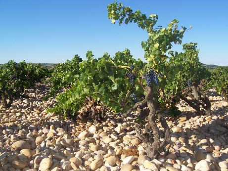 grandveneur vineyard