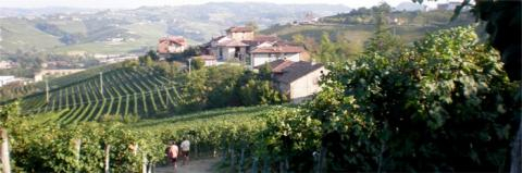 Gagliasso Vineyards
