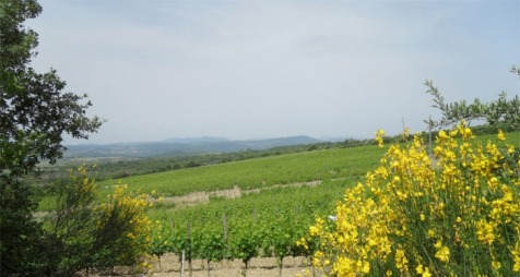 Poggio Nardone Vineyards